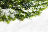 Branch of Christmas tree with snow — ストック写真