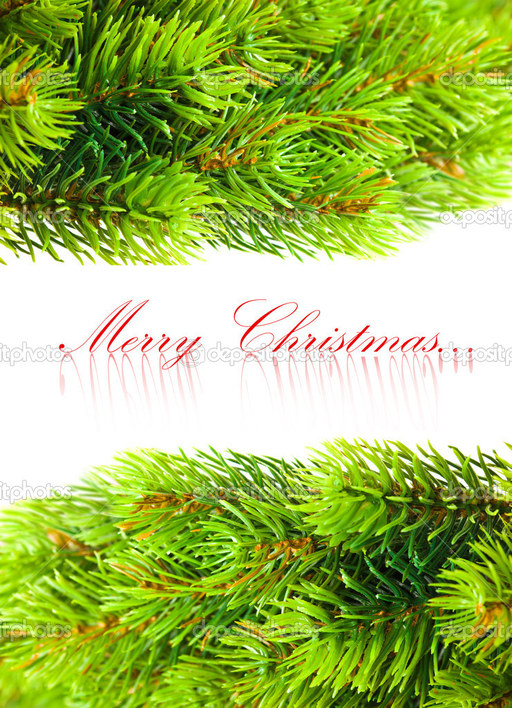 Branch of Christmas tree on white   Stock Photo #4574440