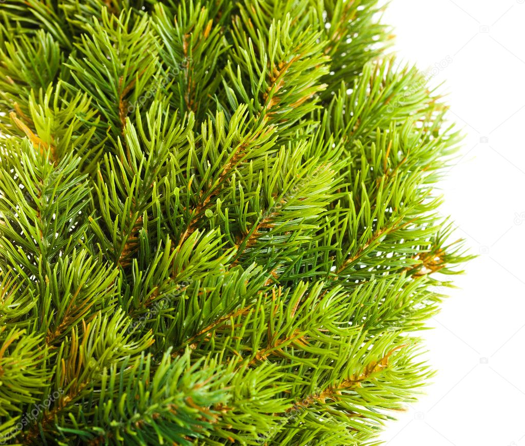 Branch of Christmas tree on white  — Stock Photo #5104422