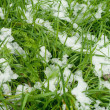 Fresh grass — Stock fotografie