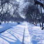 Kış Şeritli kumlu Ağaçlar arasında — Stok fotoğraf