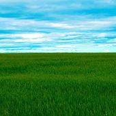 Panoramic view to vivid green grass — Stock Photo