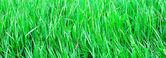 панорамный вид на яркой зеленой траве — Стоковое фото
