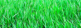 Panoramic view to vivid green grass — Stock Photo