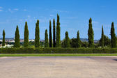 Cypress hedge in europe — Stock Photo