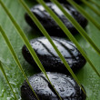 Black spa stones and leaves — Stock Photo