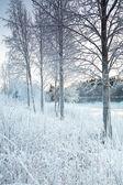 Снежный зимний пейзаж — Стоковое фото