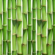 Bamboo background isolated — Stock Photo