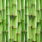 Bamboo background isolated — Stock Photo #4501239