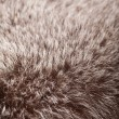 Stock Photo: Abstract fur background