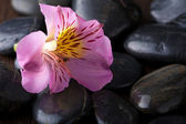 Black massage stones and flower — Stok fotoğraf