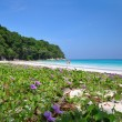 Paradise Beach at Ta chai Island — Stock Photo