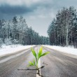 Green plant growing through the road in winter forest — Stock Photo