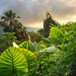 Picture of a tropical background - Stock Photo