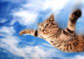 Flying funny kitten — Stock Photo