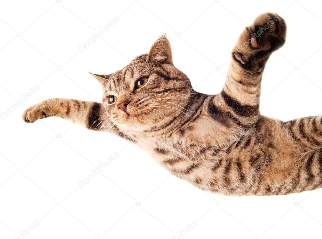 Flying funny kitten — Stock Photo #5310616