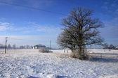 Tree on winter field — Stock Photo