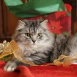 Stock Photo: Christmas Cat and Ribbons
