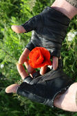 Men's hands embracing a poppy — Stock Photo
