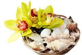 与贝壳和石头与兰花花篮子 — 图库照片