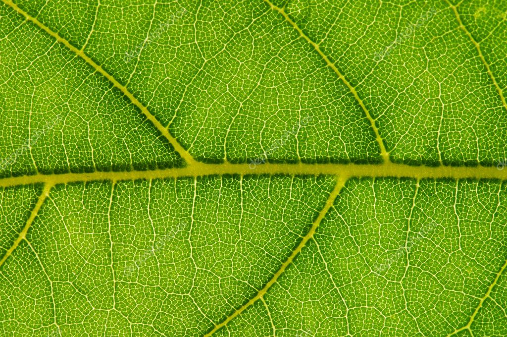 Texture of a green leaf as background — Stock Photo #4266069