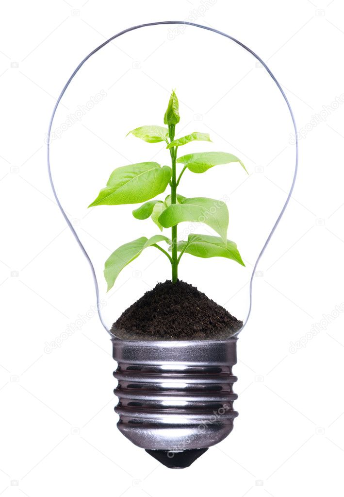Light bulb with a growing plant inside isolated on white background — Stok fotoğraf #4323938