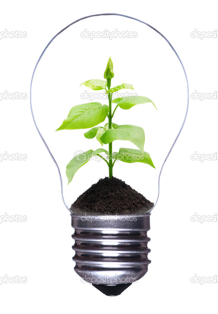 Light bulb with a growing plant inside isolated on white background  Stock Photo #4323938