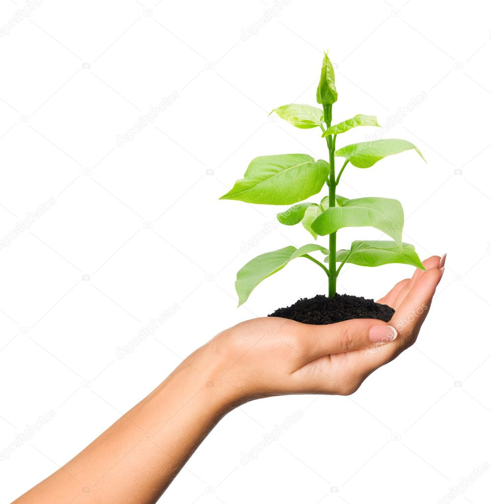 Hand with a plant isolated on white background — Stock Photo #4390313