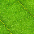 Stock Photo: Leaf background