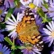 The butterfly sits on a blue flower — Stock Photo