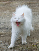 White fluffy cat — Stockfoto