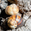 Spiral shell on a tree — Stock Photo