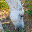 White horse on hill — Stock Photo