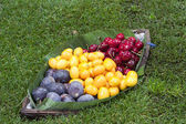 Frtesh fruits — Stock Photo