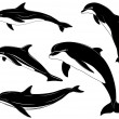 Set of various dolphins — Stock Vector #4592222