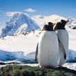 Two penguins — Foto Stock