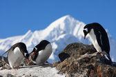 Three penguins — Stock fotografie
