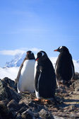 Tři tučňáci — Stock fotografie