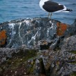 A bird on a rocks - Photo