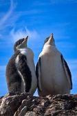 Dos pingüinos idénticos — Foto de Stock