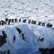 A large group of penguins — Stock Photo #4145708