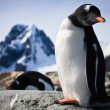 Penguin standing on the rocks — Stok fotoğraf