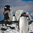 Two penguins — Foto de Stock