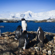Stock Photo: Group of penguins