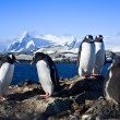 Group of penguins — Foto Stock