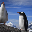 Two penguins resting — Stock Photo #4212449