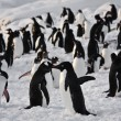 A large group of penguins — Foto Stock