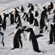 A large group of penguins — Stockfoto