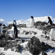 Penguins on rock — Stock Photo #4299448