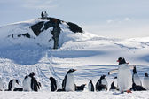 Un grand groupe de pingouins — Photo